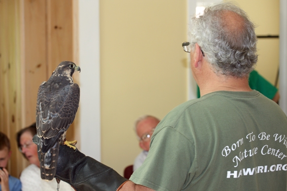 John Maxson from the Born to be Wild Nature Center with a peregrine falcon.