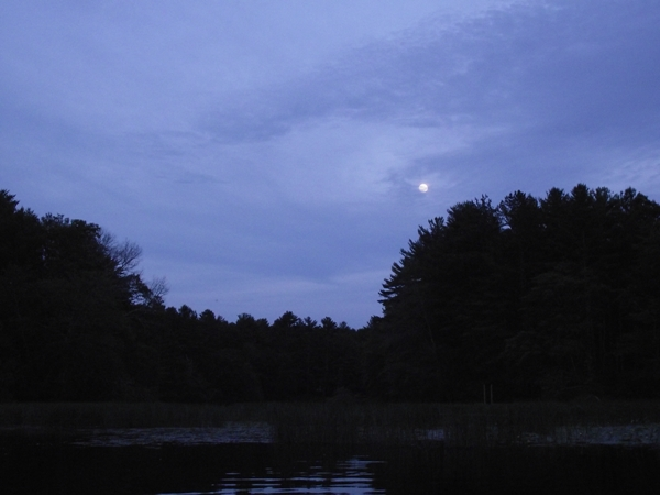 The almost full moon rising over the trees.